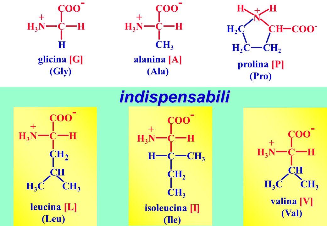 indispensabili H N CH COO- CH2 H2C + glicina [G] (Gly) H COO- C H3N +